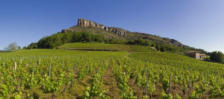 The Pouilly-Fuissé AOC now includes some Premier Cru wines!
